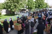 MIMARSINAN - Domates Fiyatları Arttı, Vatandaşlar Belediyenin Dağıttığı Domates Fidelerine Akın Etti