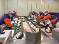 Trabzon'dan Japonya'ya Somon Balığı İhraç Edilecek