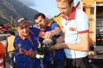 YAVRU KÖPEK - Amasya'da Menfeze Düşen Yavru Köpeği Ekipler Kurtardı