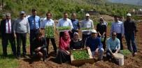 EKINEZYA - Bitlis'te Tıbbi Ve Aromatik Bitkiler Toprakla Buluştu