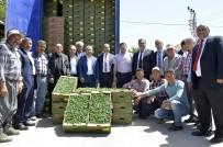 İSMAİL TEPEBAĞLI - Büyükşehir Belediyesi, Çamlıyayla Çiftçisine 260 Bin Domates Fidesi Dağıttı
