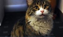 HAYVAN HAKLARı - CHP'nin Resmi Kedisi 'Şero' Salondakilere Seslendi
