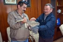 Kabadüz'de Yaralı Balıkçıl Kuşu Tedavi Altına Alındı