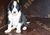 YAVRU KÖPEK - Zifte Yapışan Yavru Köpeklere Yardım Eli