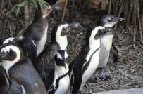 HAYVANLAR ALEMİ - Sıcak havayı görenler hayvanat bahçesine akın etti