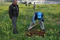 ORMAN İŞLETME MÜDÜRÜ - Sonbaharda Dikilen Fidanların Ot Alma Ve Çapa Çalışmaları Başladı