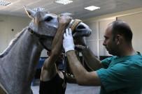 TIBBİ DESTEK - Yarış Atlarına Özel Hastane
