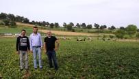 MURAT KAYA - Bu Çiftlik Ziyaretçi Akınına Uğruyor