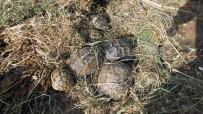 Kaplumbağayı Ezen Kişi, Şimdi 8 Tane Bakıyor