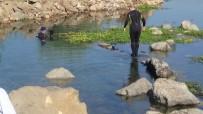 REYHANLI - Kırıkhan Gölbaşı Gölü Canlandırılıyor
