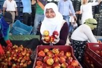 ATEŞ ÇEMBERİ - Türkiye'nin Meyve Deposu Mersin'de Turfanda Meyve Hasadı Başladı