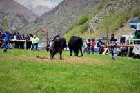 İBRAHİM KORKMAZ - Aksu Boğa Güreşleri Festivali Yapılıyor