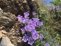 TÜRK LIRASı - Bu Çiçeği Koparmanın Cezası 42 Bin Lira