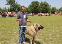 Çoban Köpekleri Güzellik Yarışması