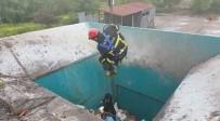 YAVRU KÖPEK - Çöpe Düşen Köpeği İtfaiye Kurtardı