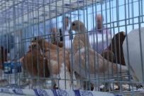 HASAN YıLDıZ - Güvercinsevenler Tekirdağ'da Bir Araya Geldi