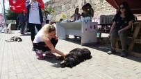 FATİH BELEDİYESİ - Hayvanseverler, Minik Dostlarıyla 'Sevgi Gününde' Buluştu