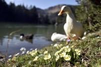 YEŞIL YOL - Limni Gölü'nde Turizm Sezonu Hızlı Başladı
