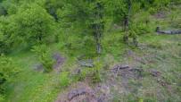 AHMET GÜLTEKIN - Uludağ'da Kestane Ağaçlarını Kurutan Katil Arılara Çare Bulunamıyor