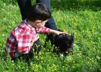 (Özel) Mert Efe'nin Kedi Sevgisi Kaybolmasına Neden Oldu