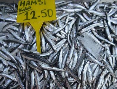 Balıkçılara 'hamsi' sürprizi