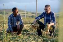 ALI ÖZKAN - Başkan Özkan, Dünya Çiftçiler Gününde Tarım İşçileriyle Beraber Soğan Topladı