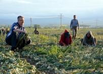 ALI ÖZKAN - Belediye Başkanı Çiftçiler Gününde Tarlada Soğan Topladı