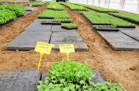 BÜLENT TURAN - Büyükşehirden Sebze Üreticilerine Büyük Destek