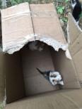 YAVRU KEDİ - Ormanlık Alanda Ölüme Terk Edilen 60 Yavru Kediyi Eyüp Belediyesi Ekipleri Kurtardı