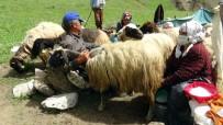 Yaylacıların Kato Dağı Eteklerindeki Zorlu Mesaisi Başladı