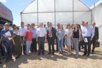 TARIM BAKANLIĞI - Rusya Tarım Bakanlığı Heyeti Serik'teki Seraları İnceledi