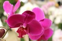 FUZULİ - Anneler Gününde İnternet Üzerinden Yapılan Çiçek Satışları Patladı