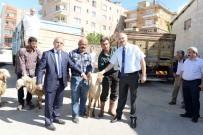 ÇAPA MOTORU - İhtiyaç Sahipleri Hayvancılıkla Kalkınacak