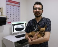 SOLUNUM YETMEZLİĞİ - Veterinerlerden Hayvan Sahiplerine Uyarı