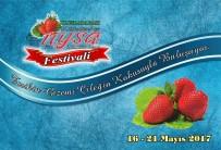 BOĞA GÜREŞİ - Sultanhisar'da Çilek Festivali Hazırlıkları Tamamlandı
