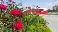 GÖKHAN KARAÇOBAN - Yaz Çiçekleri Toprakla Buluştu