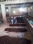 SOLUCAN GÜBRESİ - Gördüğü haberden etkilendi, solucan çiftliği kurdu