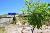 SONBAHAR - Karayollarına Dikilen  Akasyalar İle Çiçek Açmaya Başladı