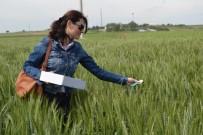 KARAHıDıR - Süne İle Biyolojik Mücadelede 700 Bin Faydalı Böcek Salındı