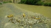 Yol Kenarına Boşaltılan Balıklar Tepkiye Neden Oldu