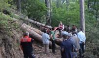 Üzerine Ağaç Devrilen Orman İşçisi Hayatını Kaybetti