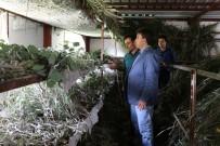 NURULLAH KAYA - 90 Metrekarede Beslediği İpek Böceklerinden 40 Günde 15 Bin TL Kazanıyor