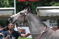 UÇAK BİLETİ - Atlar Bu Kez Güzellik İçin Yarıştı