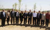 LÜTFI EFIL - Büyükşehir'den 30 Hektarlık Muhtarlar Hatıra Ormanı