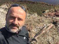 Fatsa'da Ölü Yunus Karaya Vurdu
