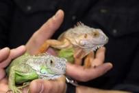 PETSHOP - İguanalar Çocukların İlgi Odağı Oldu