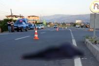 FEN BILIMLERI - Hataylı Öğretmen Aydın'daki Kazada Can Verdi