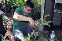 HAYVANLAR ALEMİ - Bonsai Sanatı İle Ağaçlara Şekil Verdiler