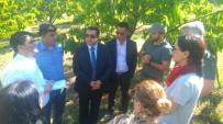 TARIM BAKANLIĞI - Çin Tarım Heyetinden Kiraz Bahçelerinde İnceleme