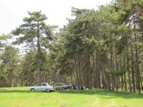 PIYADE - Doğa Harikası Piknik Alanı Sahipsiz
